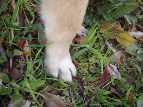 だいの足や?_a0077071_14562197.jpg