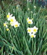 春を感ずる美女ボーカル三人 ~巧みなジャケット・マーケティング~_b0102572_2121415.jpg