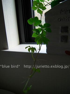 c0197173_0392180.jpg