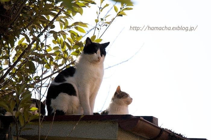 Cats in Motomachi Town #7_c0158775_20505072.jpg