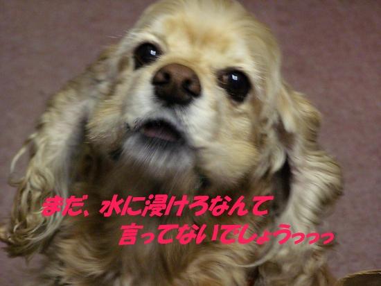 b0067012_2275498.jpg