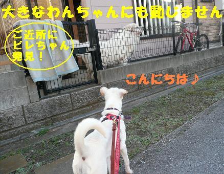 f0121712_10493659.jpg