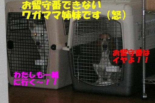 f0121712_1127212.jpg