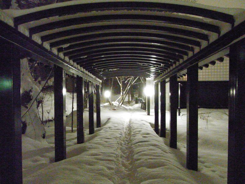 新雪の中を_c0025115_1745167.jpg
