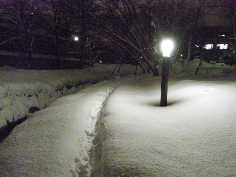 新雪の中を_c0025115_174735100.jpg