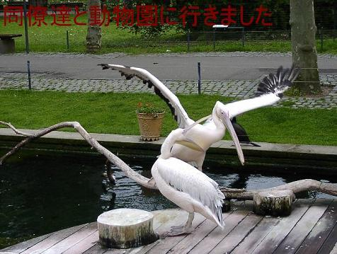 夫の動物園写真 Wilhelma in Stuttgart_d0144726_20381258.jpg