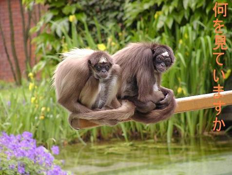 夫の動物園写真 Wilhelma in Stuttgart_d0144726_2039312.jpg