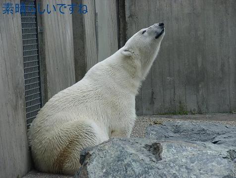 夫の動物園写真 Wilhelma in Stuttgart_d0144726_20393937.jpg