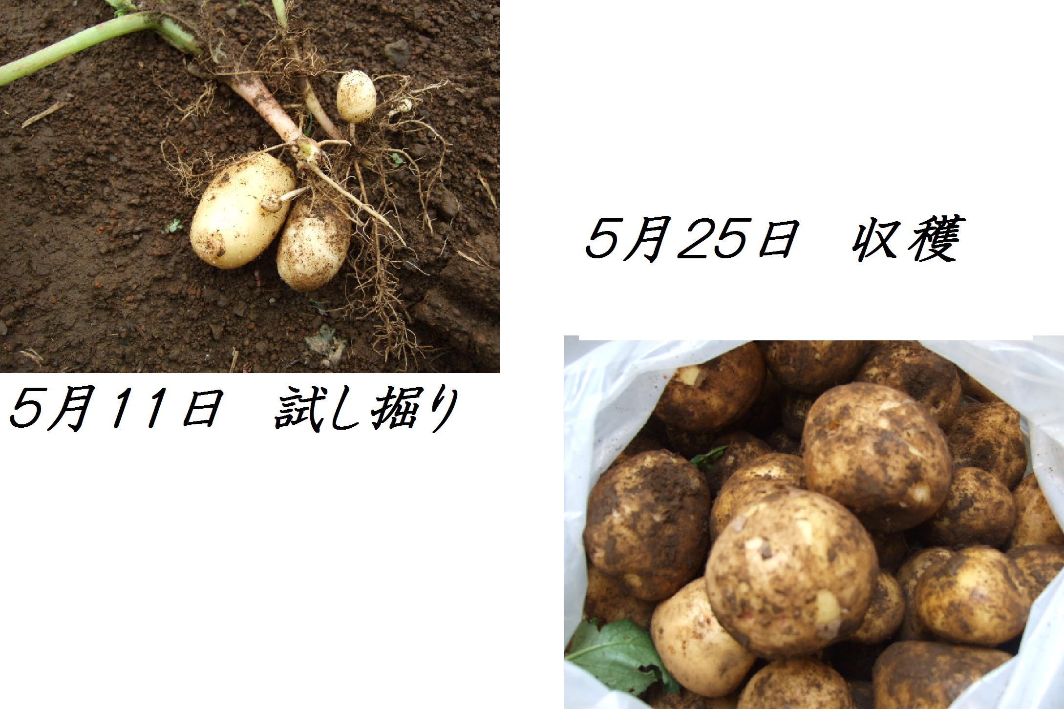 b0137932_104558.jpg
