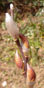 春を見つけに_e0152233_003381.jpg