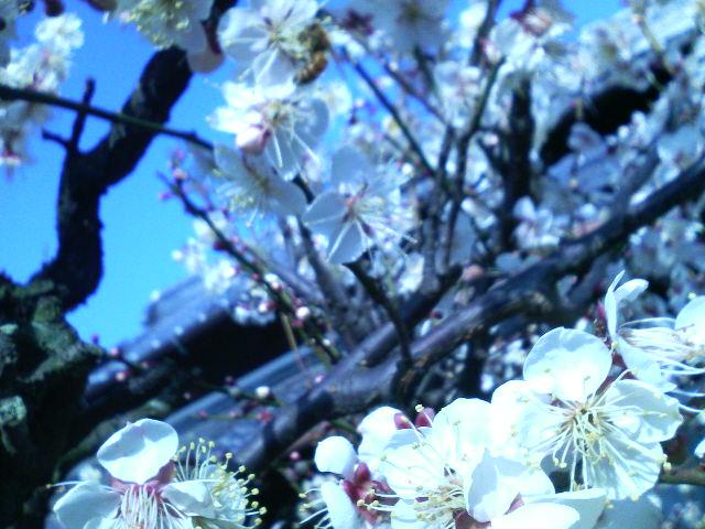 春まじか_d0134352_13203186.jpg