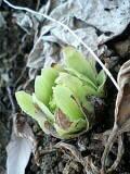 春のかほり_b0084194_1356381.jpg