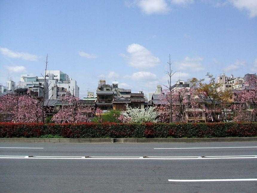 「桜情報・・・京都・白川周辺」_d0133024_10525330.jpg