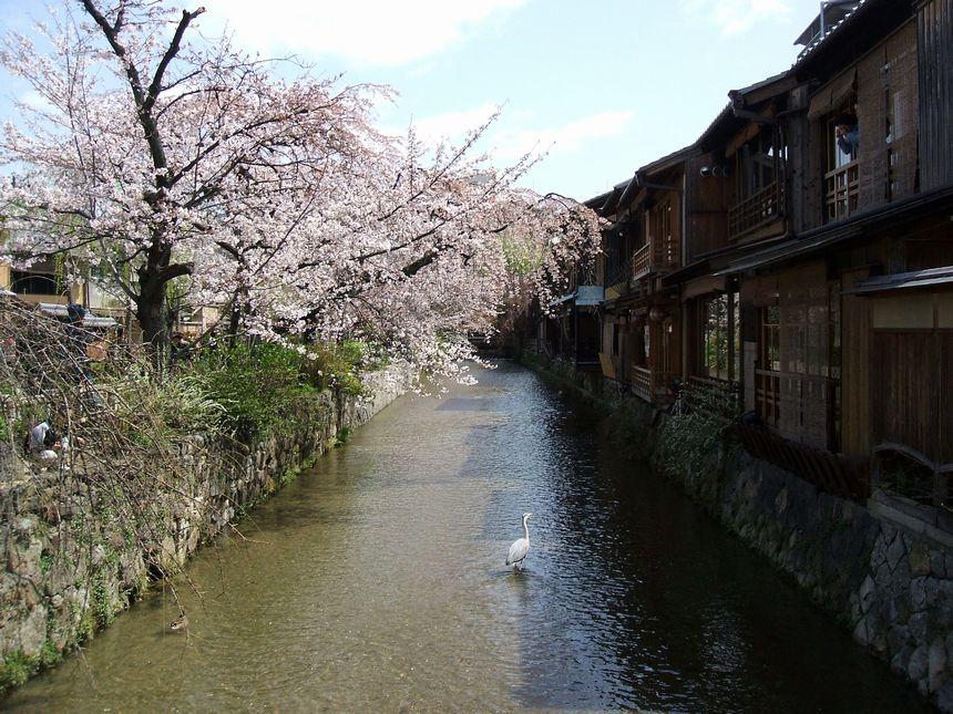 「桜情報・・・京都・白川周辺」_d0133024_10531765.jpg