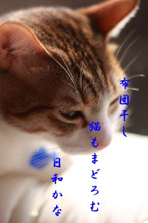 c0136933_19564186.jpg
