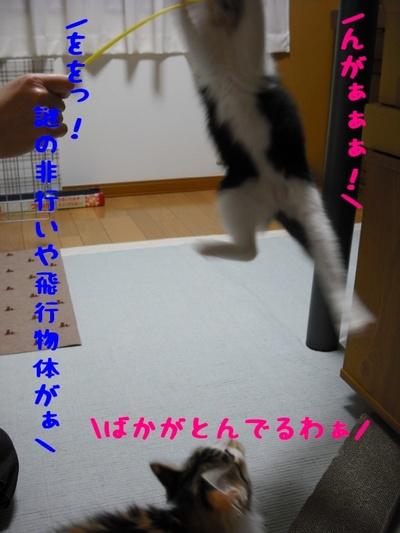c0181639_1937031.jpg