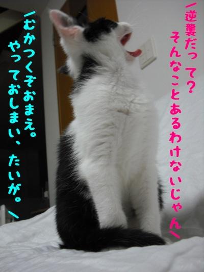 c0181639_19372297.jpg