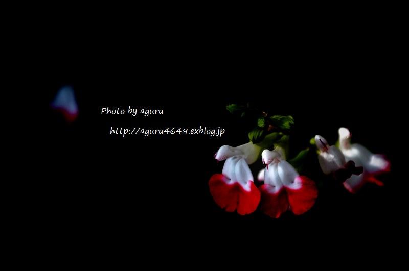 f0160241_015868.jpg