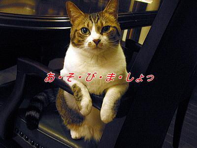 b0097848_15463171.jpg