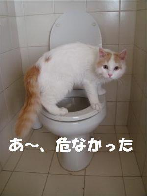 c0195250_20135340.jpg