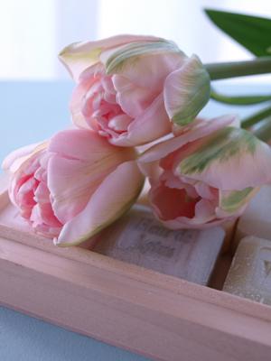春の訪れ_e0158653_1185095.jpg