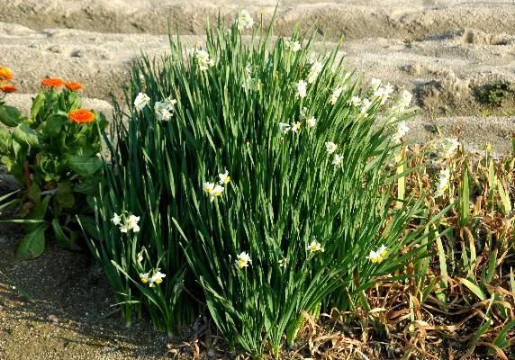 春はそこまで_b0093754_020182.jpg