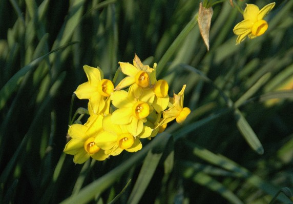 春はそこまで_b0093754_0202488.jpg