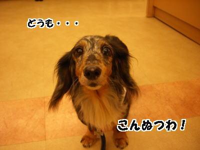 d0020869_1441093.jpg