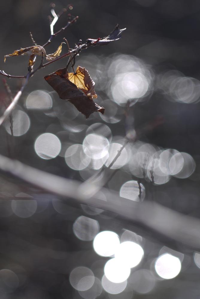 光の水玉_d0123171_18284976.jpg