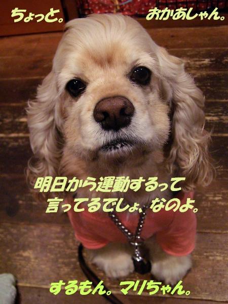 b0067012_23132986.jpg