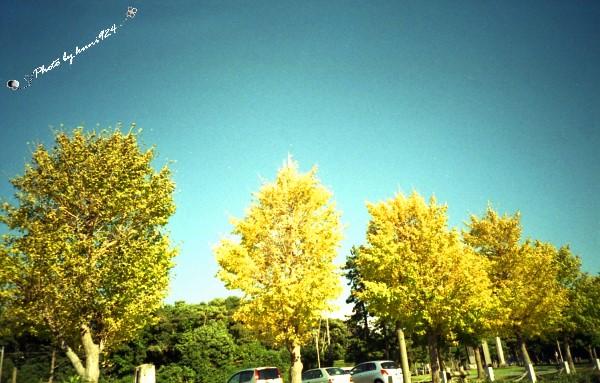 f0131365_1330156.jpg