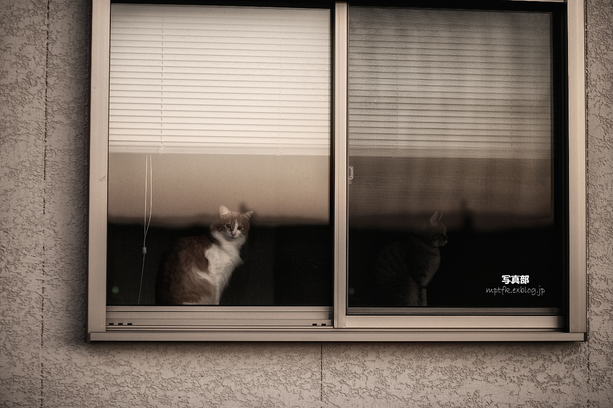 飼い猫 外猫_f0021869_23234678.jpg