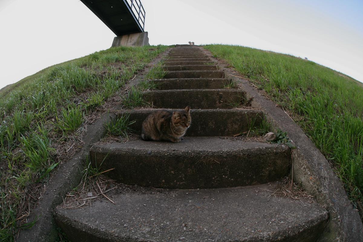 飼い猫 外猫_f0021869_23310100.jpg