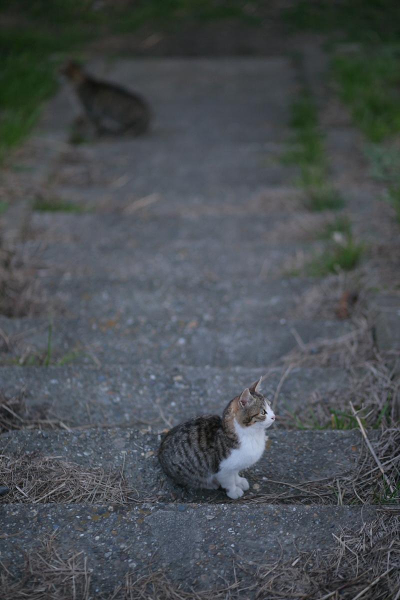 飼い猫 外猫_f0021869_23314199.jpg
