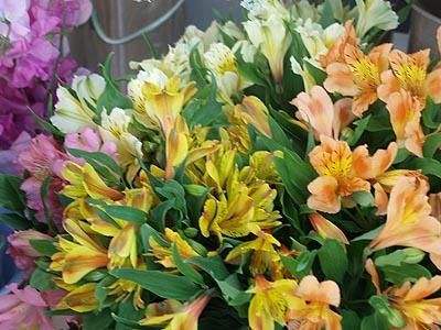 【旬のイチオシ!】春の花いろいろ( byラ・パンセ)_b0151490_23105486.jpg