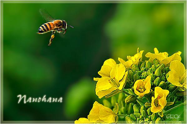 黄色い訪れ ・・・ フォトショップレタッチ授業 ~★_d0147591_16144825.jpg