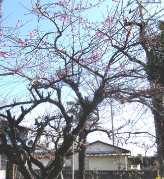 増田農園、春支度_c0130206_1836413.jpg