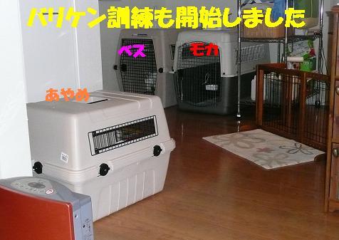 f0121712_13431663.jpg