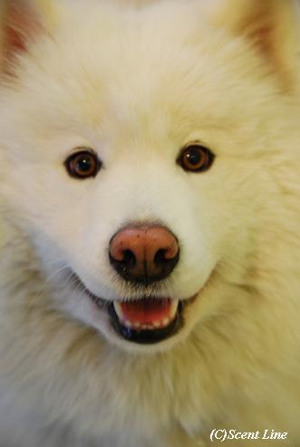 「犬の勉強会」変更のお知らせ_c0099133_22523738.jpg