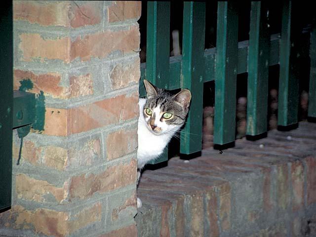 猫のフン(-_-;)_e0159249_15581719.jpg