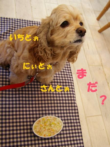b0067012_1383262.jpg