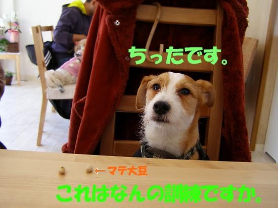 b0067012_1384792.jpg