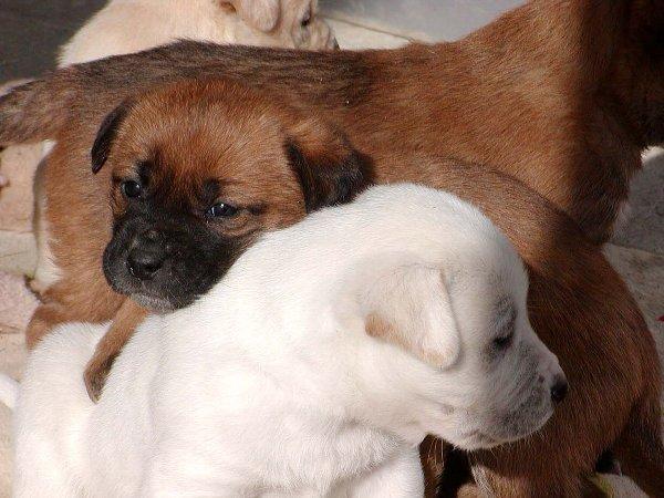 子犬たち_c0057390_22554179.jpg