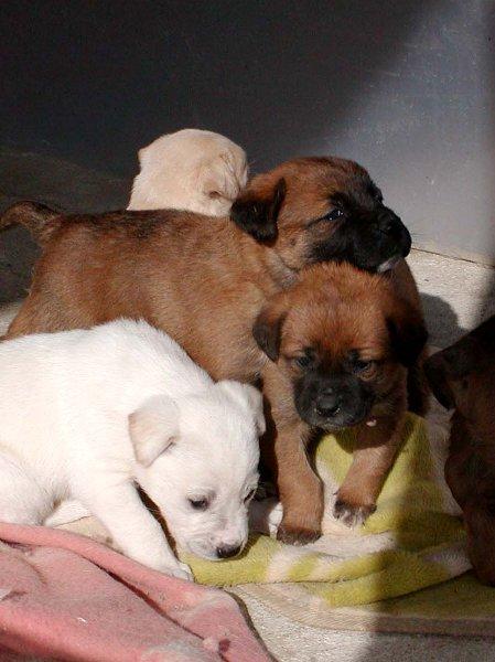 子犬たち_c0057390_22562953.jpg