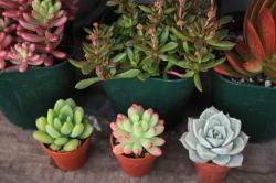 plants_c0118809_1744055.jpg