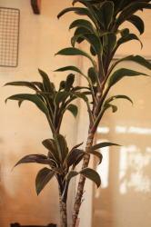 plants_c0118809_18352513.jpg