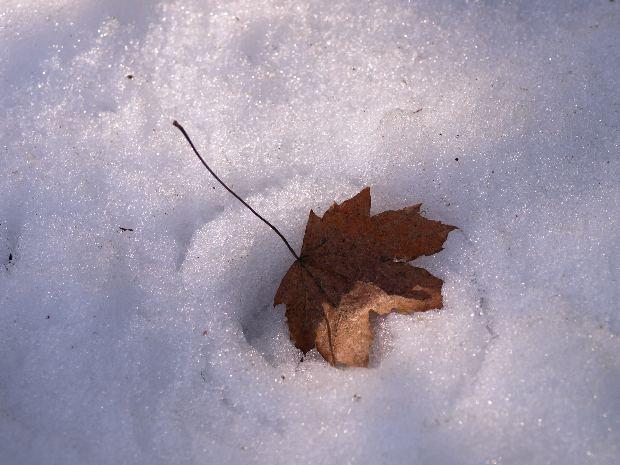 雪散椿_e0169421_16321547.jpg