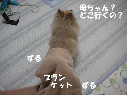 c0179136_2513661.jpg