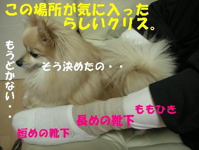 c0179136_2515691.jpg