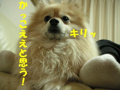 c0179136_252046.jpg